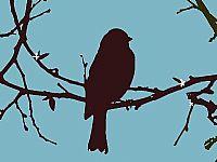 ציפור רקע תכלת