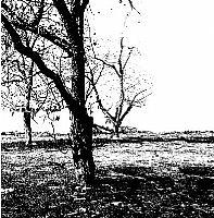 הדפס של עץ מסדרת אלכסנדר בגווני שחור לבן